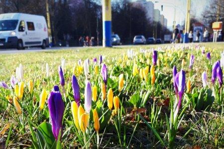 Prešov už začínajú rozžiarovať kvetinové pásy  Môžete ich nájsť v týchto  lokalitách a10784e1d83